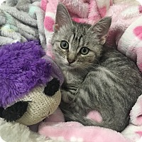 Adopt A Pet :: Shelby - Newport Beach, CA