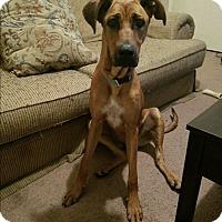 Adopt A Pet :: Maci - Allentown, PA