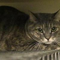 Adopt A Pet :: Dru - Centreville, VA