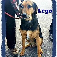 Adopt A Pet :: Lego - Marion, KY