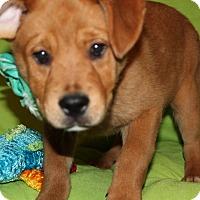 Adopt A Pet :: Selina - Trenton, NJ