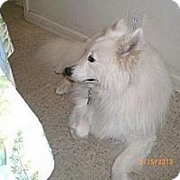 Adopt A Pet :: Haley - St. Charles, MO