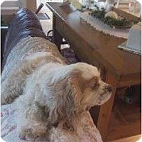 Adopt A Pet :: Bella - Tacoma, WA