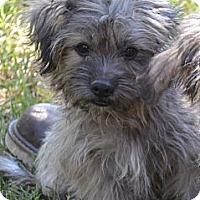 Adopt A Pet :: *Sammy - PENDING - Westport, CT