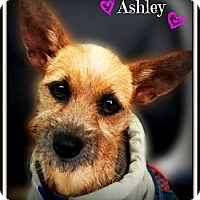 Adopt A Pet :: Ashley - Pascagoula, MS