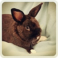 Adopt A Pet :: Bootz - Williston, FL