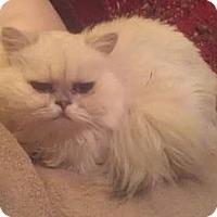 Adopt A Pet :: Faith - Davis, CA
