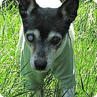 Adopt A Pet :: Emily - Evans, CO