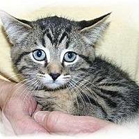 Adopt A Pet :: Marijah - Montgomery, IL
