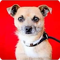 Adopt A Pet :: Peanut - Poway, CA