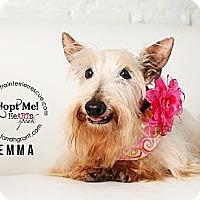 Adopt A Pet :: Emma-Longmont CO - Omaha, NE