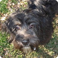 Adopt A Pet :: Gucci - Cleveland, OH