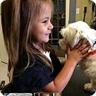 Adopt A Pet :: Cheerio B
