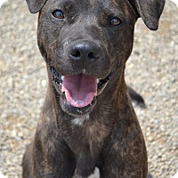 Adopt A Pet :: Sunflower - Toledo, OH