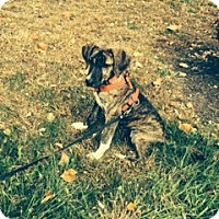 Adopt A Pet :: Bindy (courtesy listing) - Bartonsville, PA