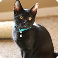 Adopt A Pet :: Yoda - Olive Branch, MS