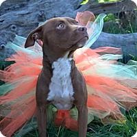 Adopt A Pet :: Addy - Los Angeles, CA