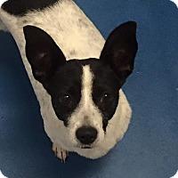 Adopt A Pet :: Anna Kendrick - Jersey City, NJ