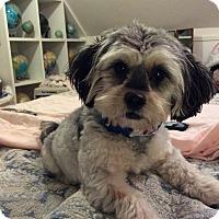 Adopt A Pet :: Mongo - Bristol, CT