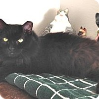 Adopt A Pet :: Glenda - Colorado Springs, CO