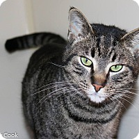 Adopt A Pet :: Darcy - Ann Arbor, MI
