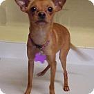 Adopt A Pet :: Arizona - 7 lbs