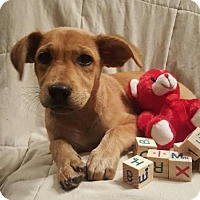 Adopt A Pet :: Lola - Newark, DE