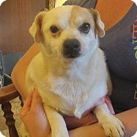 Adopt A Pet :: Cedrik - Allentown, PA