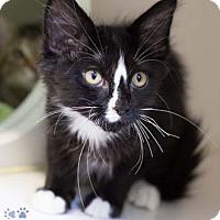 Adopt A Pet :: Rudy - Merrifield, VA