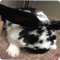 Adopt A Pet :: A693310 - Sacramento, CA