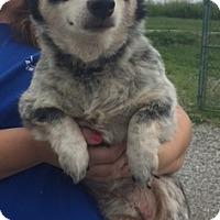 Adopt A Pet :: Unique - Doylestown, PA
