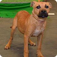 Adopt A Pet :: Trixie (URGENT) - Allentown, NJ