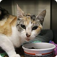 Adopt A Pet :: Desiree - Sarasota, FL