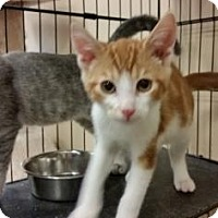 Adopt A Pet :: Heath - Cumming, GA