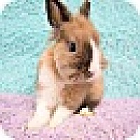Other/Unknown Mix for adoption in Montclair, California - Hans