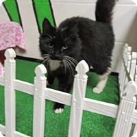 Adopt A Pet :: 16C-1527 (12/5) - Rome, GA