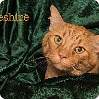 Adopt A Pet :: Cheshire - San Juan Capistrano, CA