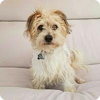 Adopt A Pet :: Max - Thousand Oaks, CA