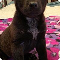 Adopt A Pet :: Tootsie - Knoxville, TN