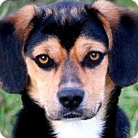 Adopt A Pet :: FINLEY(OUR LITTLE