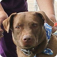 Adopt A Pet :: Red Dog - Lexington, MO