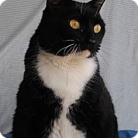 Adopt A Pet :: Nabee - Palmdale, CA