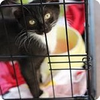 Adopt A Pet :: Larry - Justin, TX