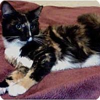 Adopt A Pet :: Darla - Elverta, CA
