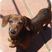 Adopt A Pet :: Heidi Anne - San Jose, CA