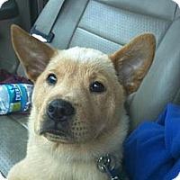 Adopt A Pet :: Dale Wilson - Southampton, PA
