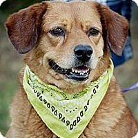 Adopt A Pet :: Eedie-local! - East Hartford, CT