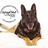 Adopt A Pet :: Elli - Denver, CO