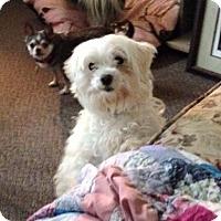 Adopt A Pet :: Babe - Prole, IA