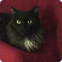 Adopt A Pet :: Emmitt - Delmont, PA